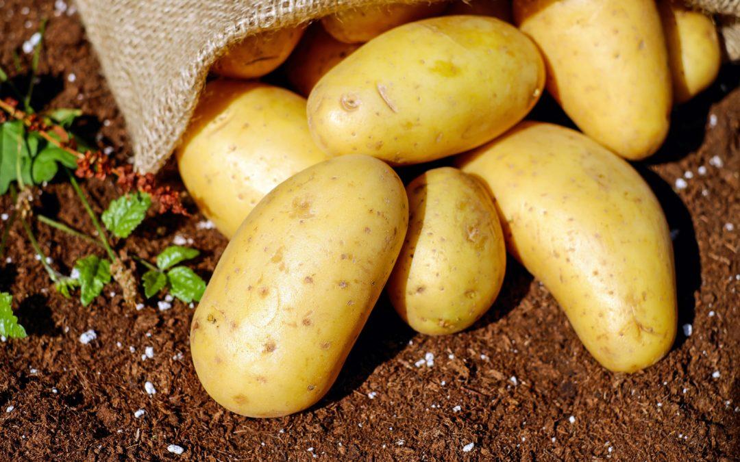 Kartoffeln: Lagerung und Zero Waste