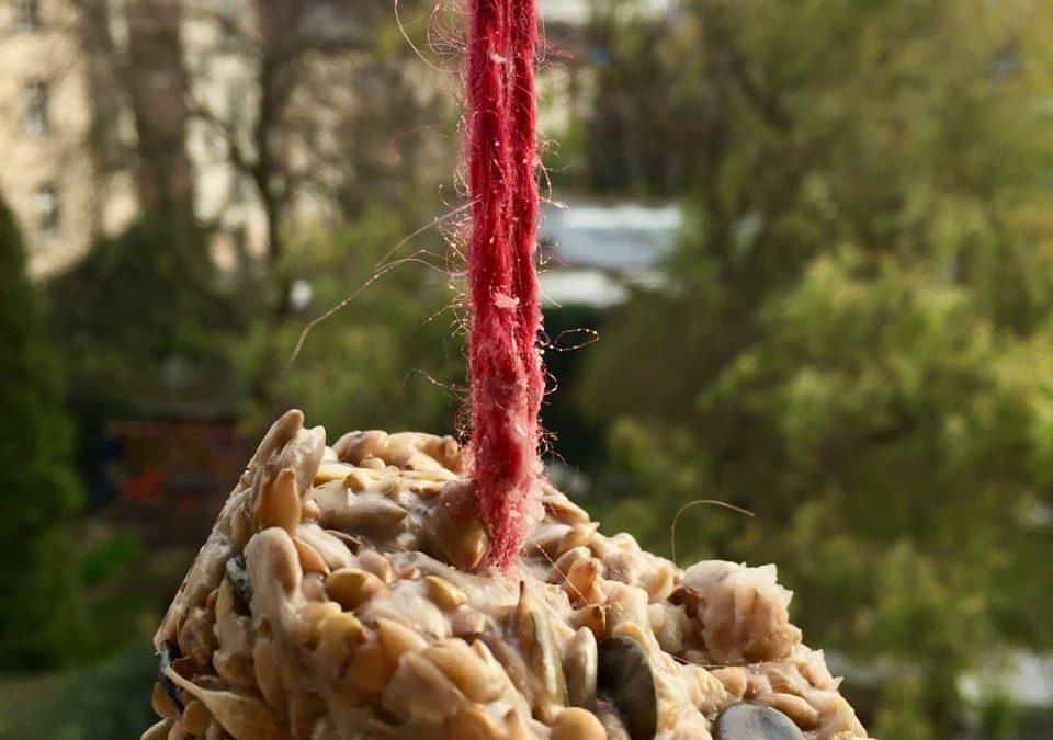 Vogelfutter selber machen- Meisenknödel